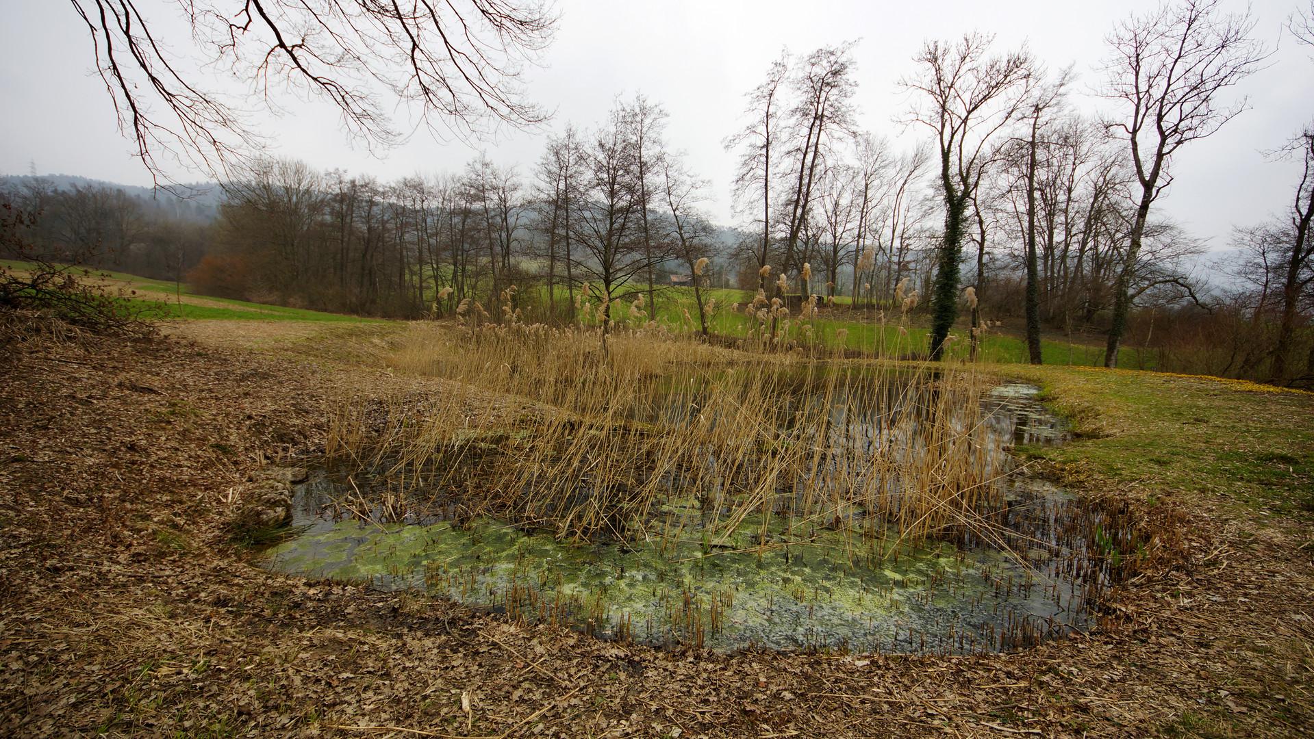 Die Auflösung - Teich mit Blubbergrüze