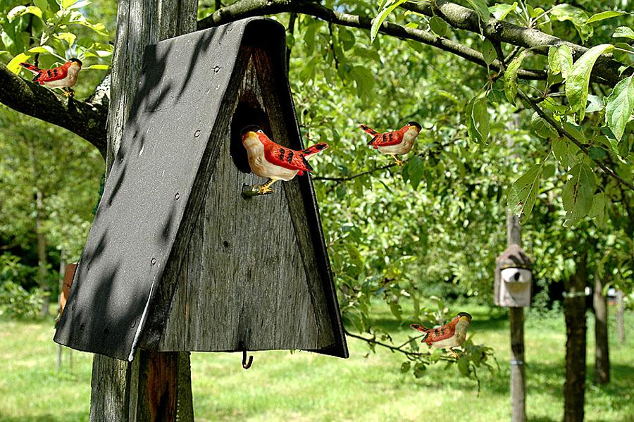 die aufzucht seltener vögel