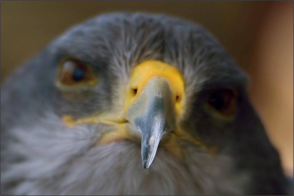 Die Augen ...
