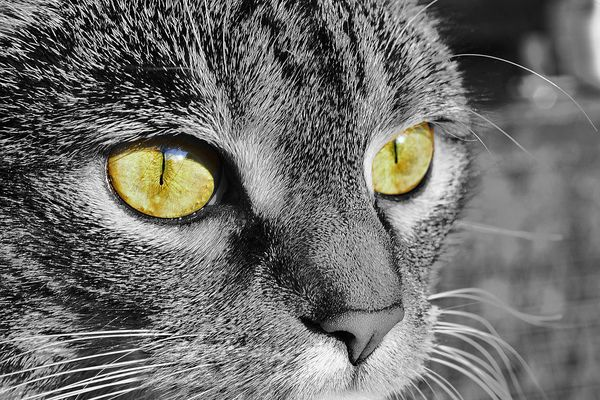 Die Augen des Ra