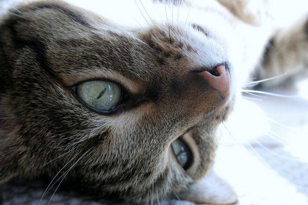 Die Augen einer Katze....