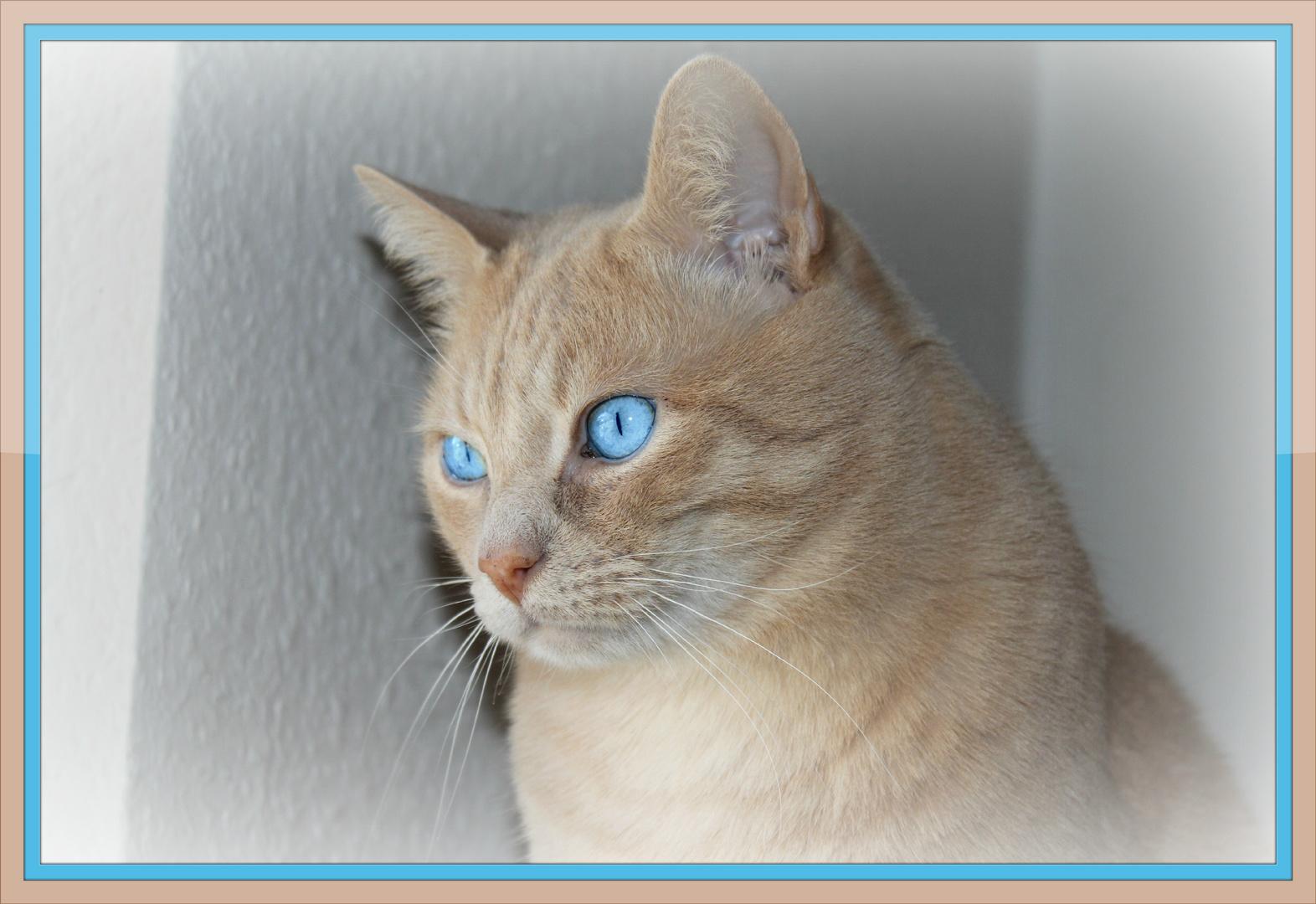 Die Augen einer Katze sind Fenster, die uns in eine andere Welt blicken lassen...