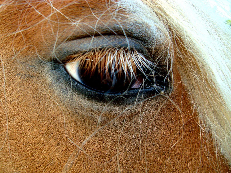 Die Augen sind das Fenster zur Seele eines jeden...auch bei Pferden o.ö