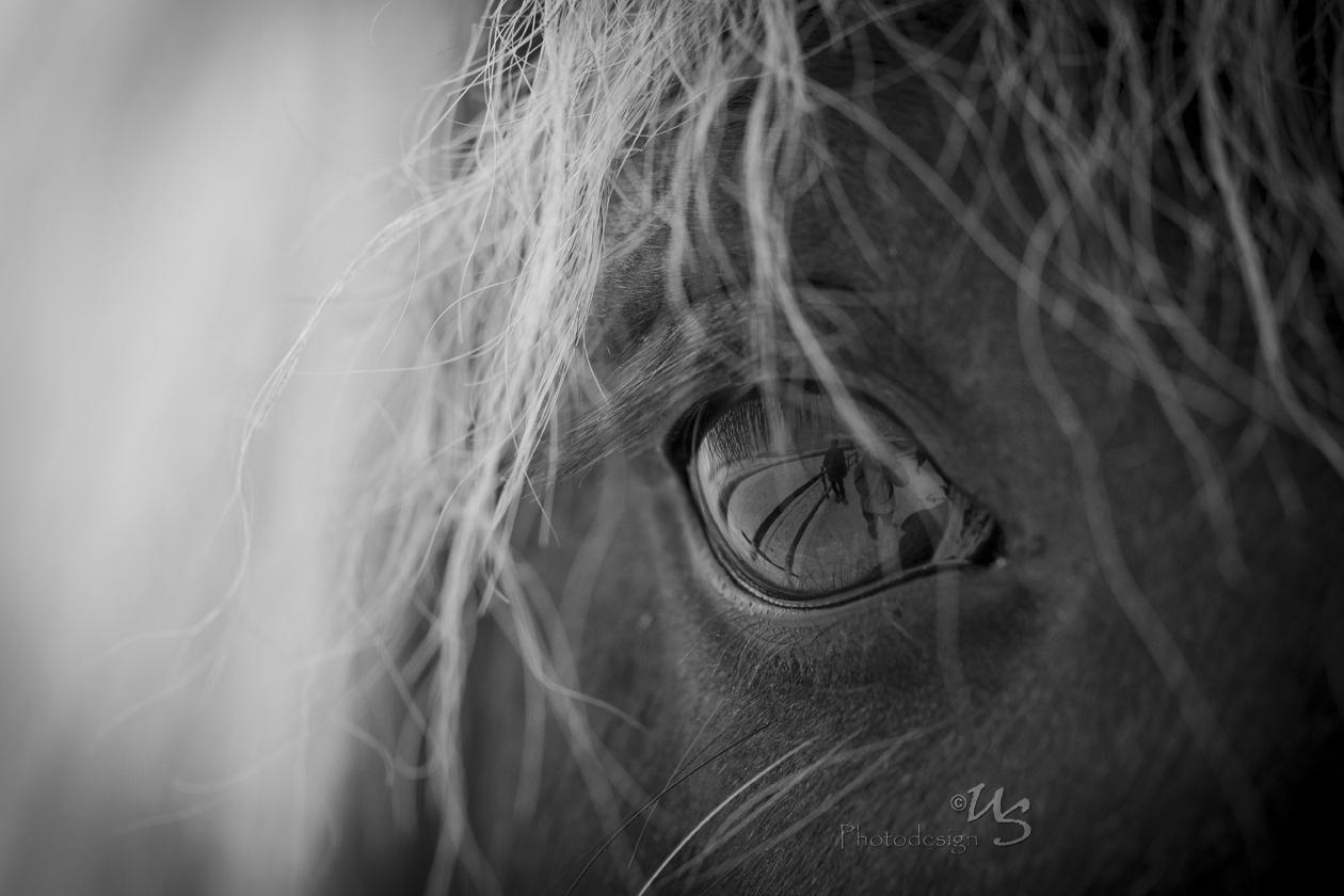 Die Augen sind die Fenster zur Seele.