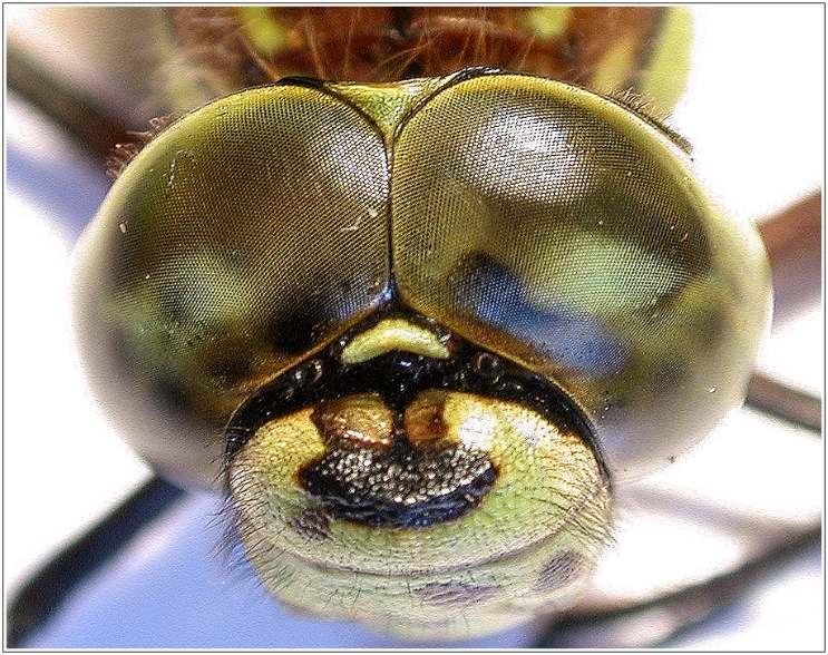 """Die Augen von """"Libelle 1001"""""""