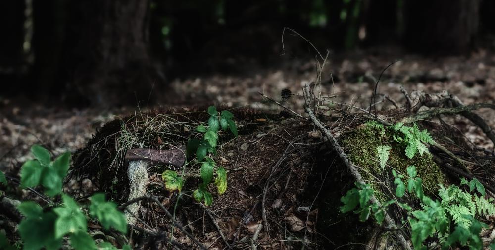 Die Axt im Walde