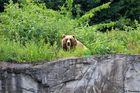 ..die Bären sind los!