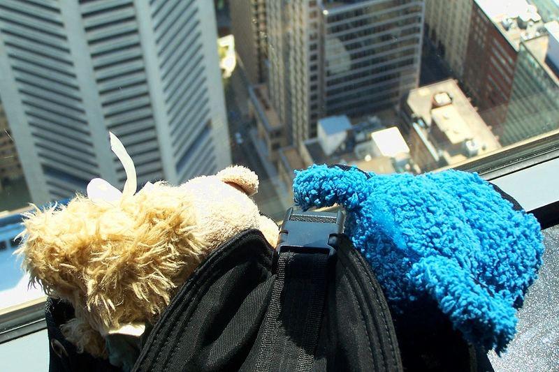 Die Bärenfamilie auf dem Sydney Tower (2)