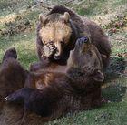 Die Bärenserie