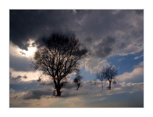"""""""Die Bäume . . ."""