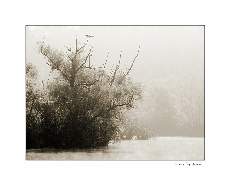 Die Bäume am See (2)
