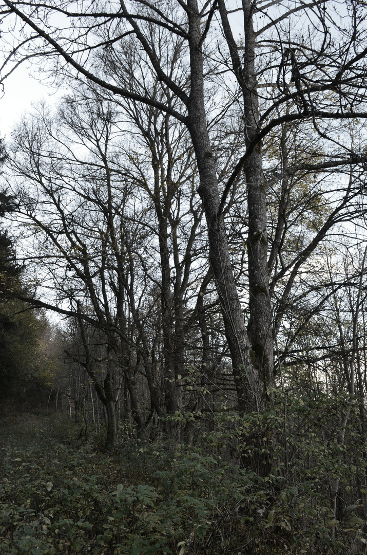 Die Bäume haben ihr Blätterkleid abgelegt