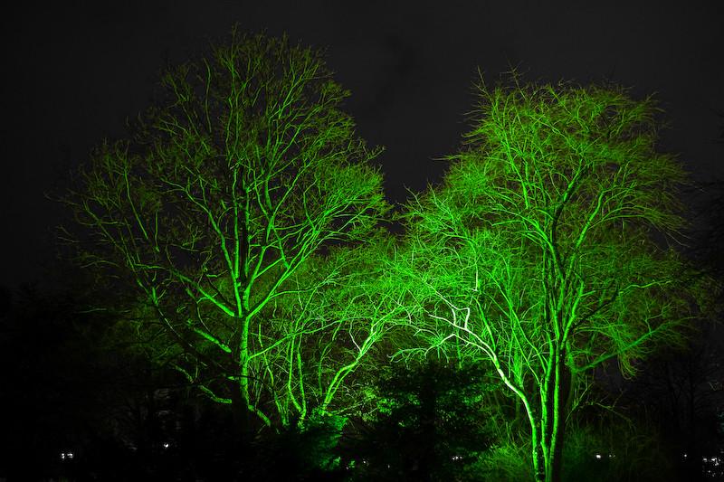 Die Bäume sind doch noch grün.