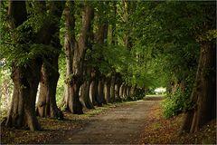 Die Bäume weisen den Weg...