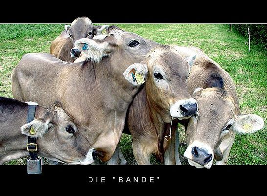 """Die """"Bande"""""""