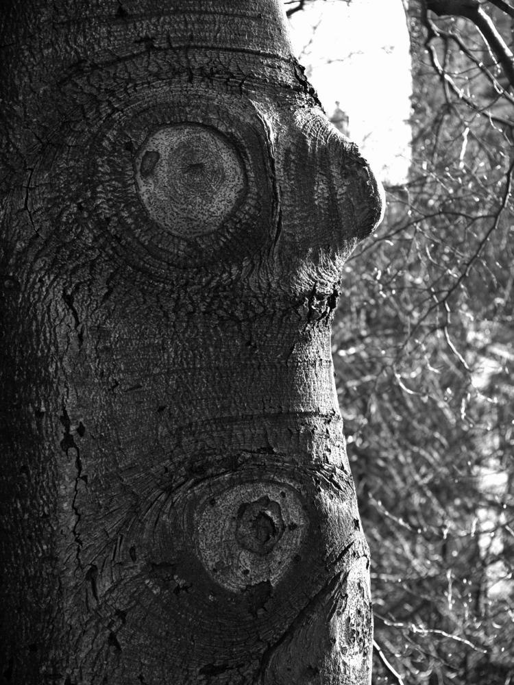 Die Baum
