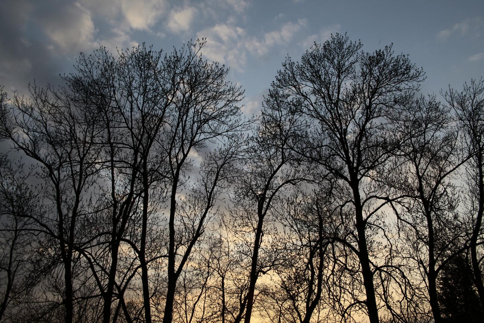 Die Baume...versammeln sich