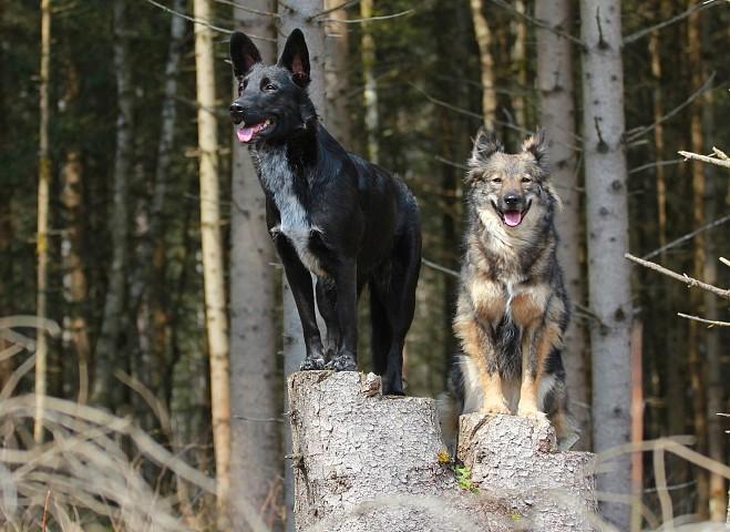 Die Baumhunde