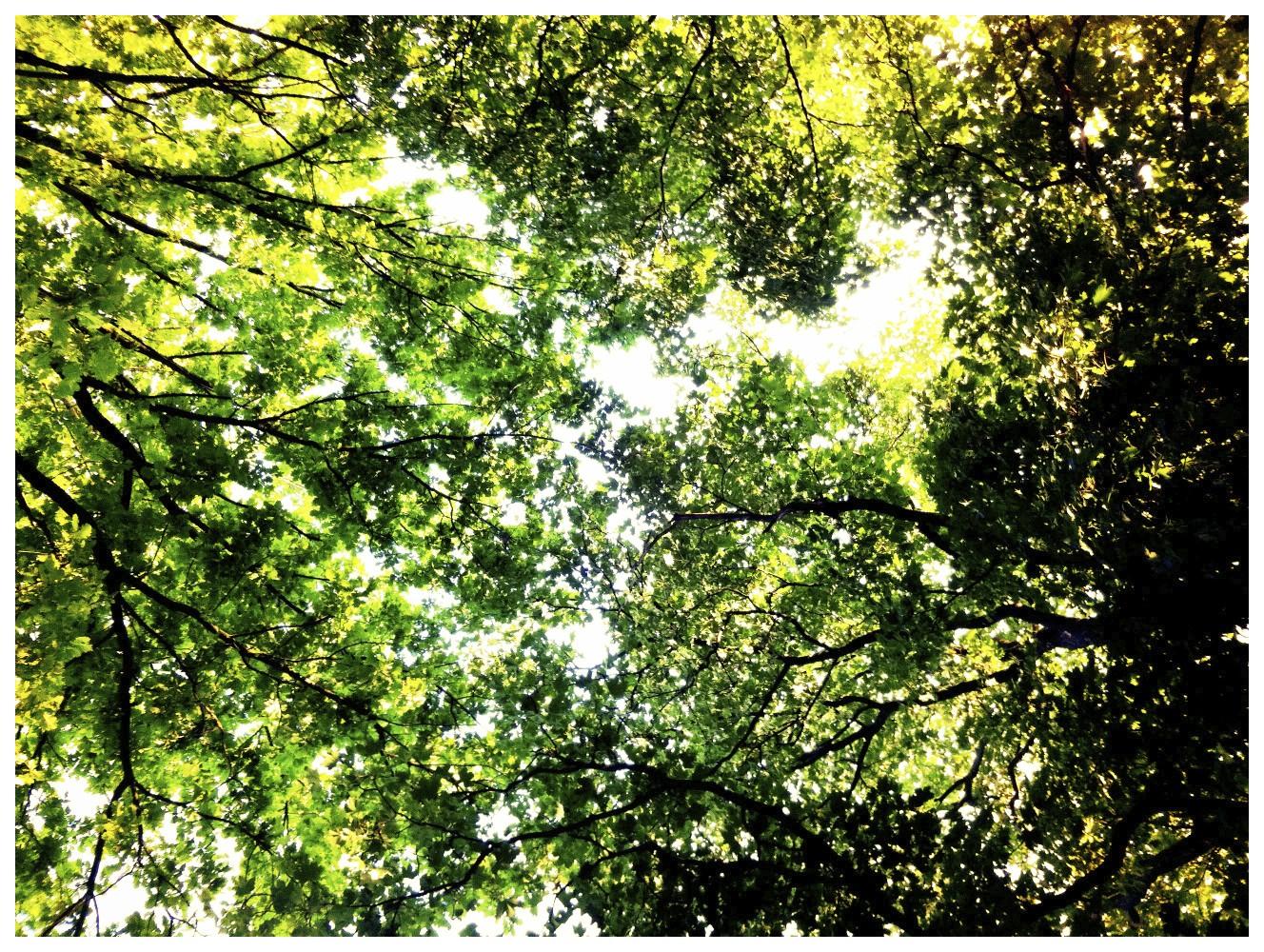 Die Baumkronen (iPhone Foto 5 Mpx)