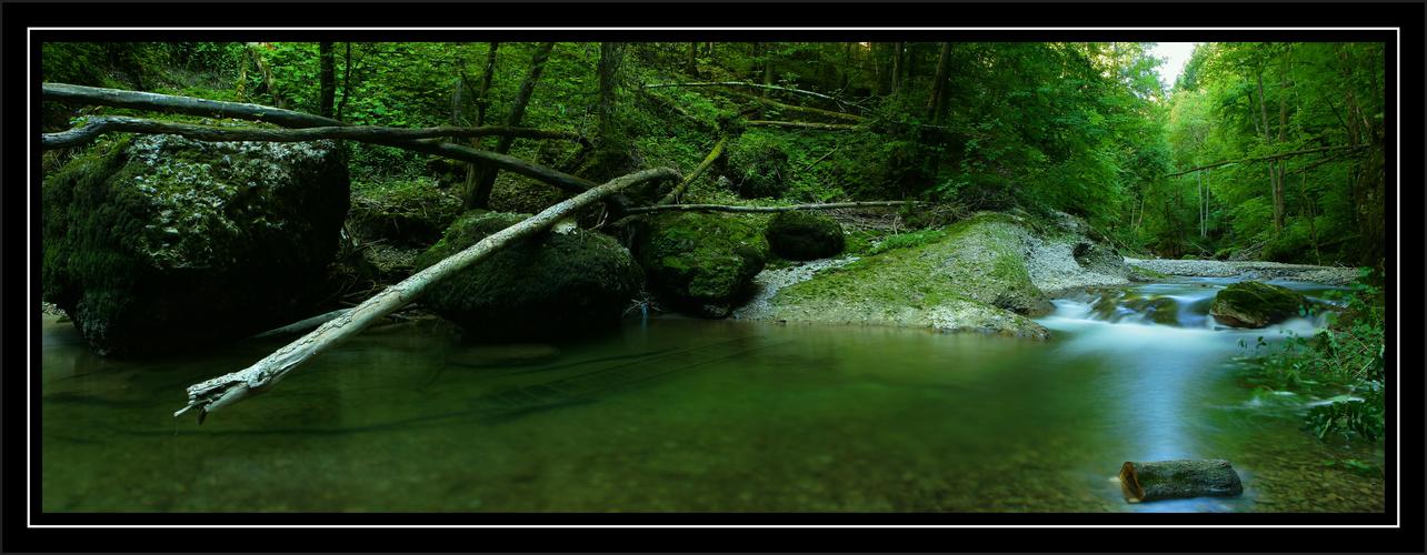 Die Baumschlange am Bach