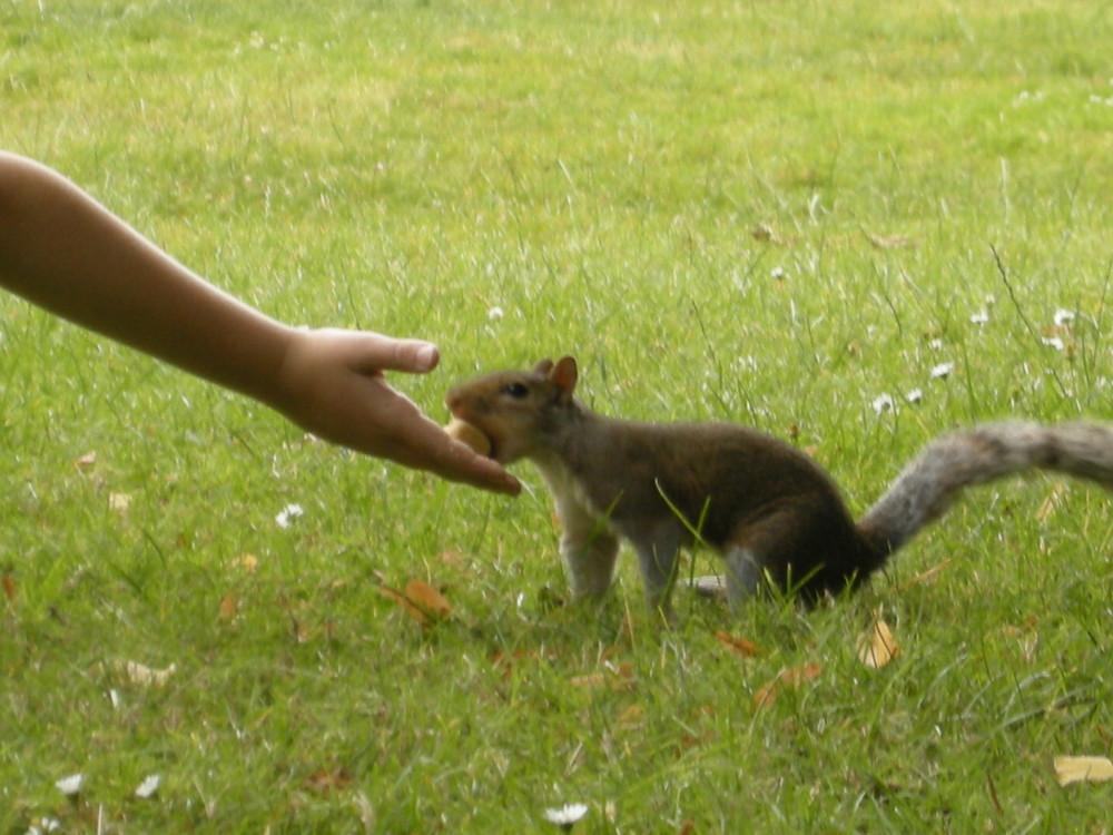 Die Begegung mit dem Hörnchen