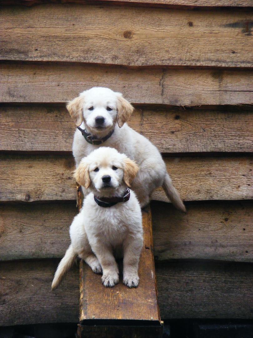 die beiden Spanner :-)