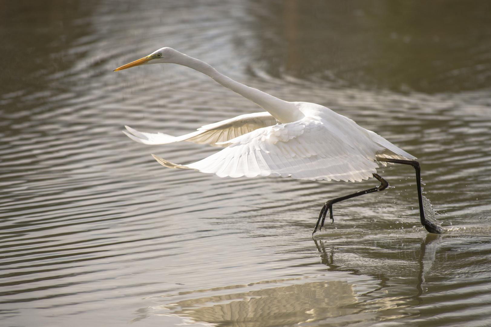 Die Beine sind einfach zu langsam wenn der Fisch ruft...