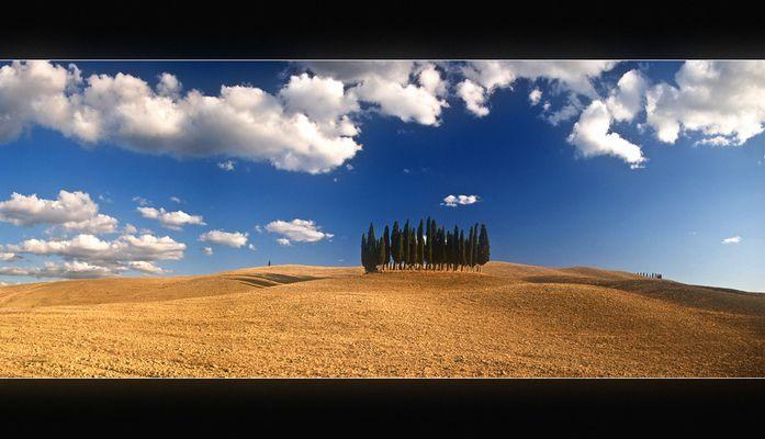 Die berühmten Bäume der Toskana...