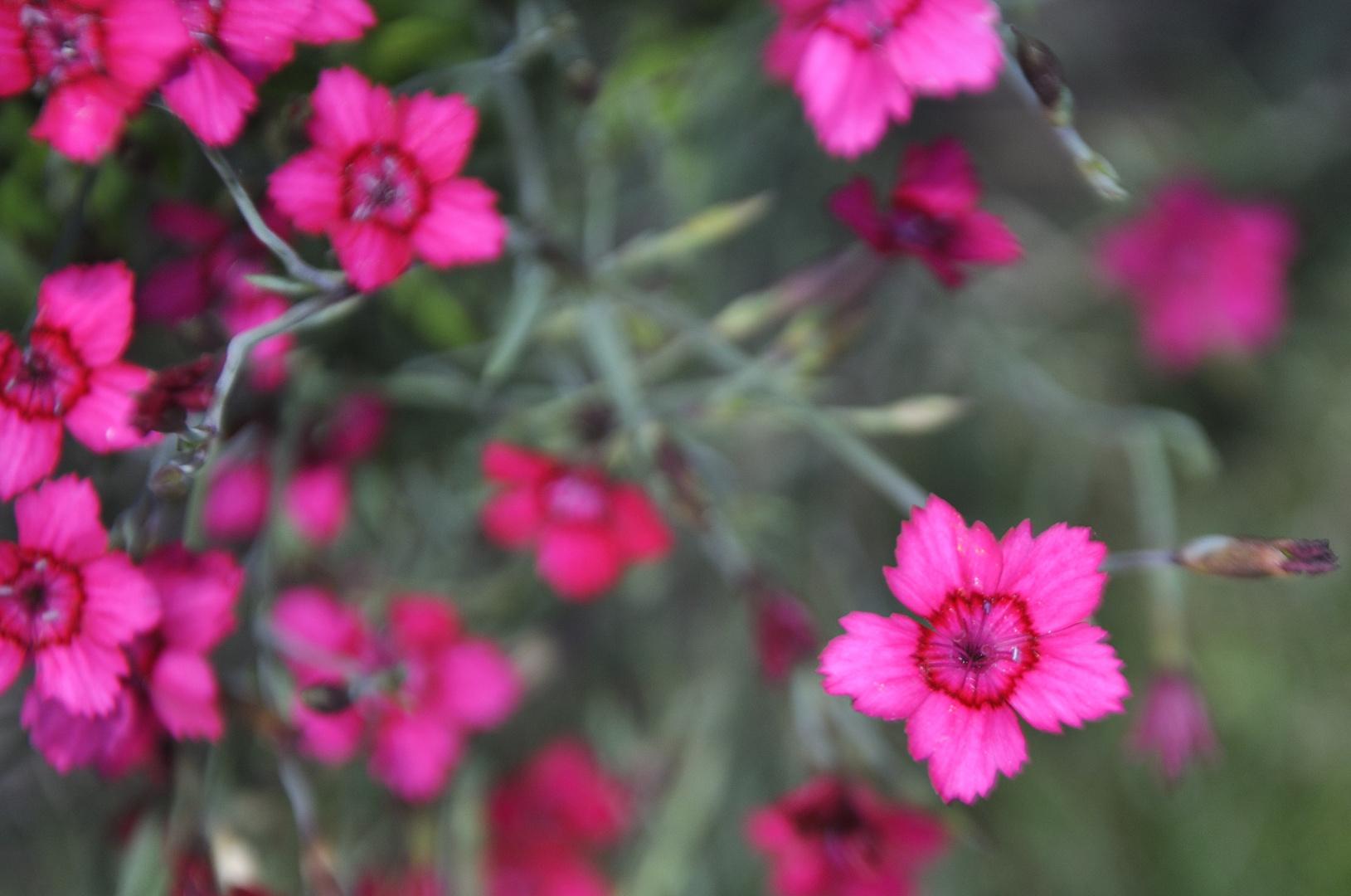 Die Bezaubernde Welt der Blüten