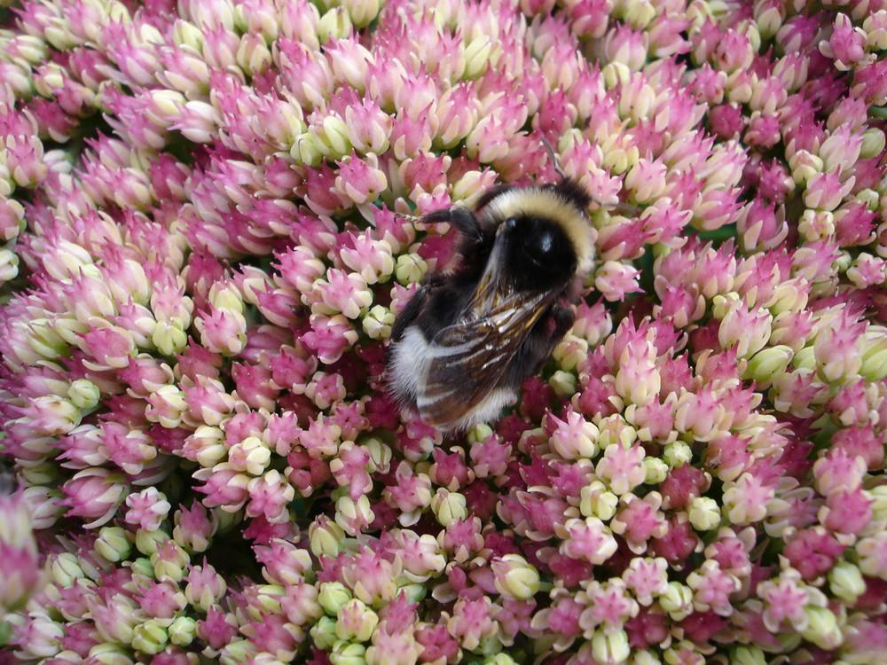 Die Bienchen und die Blümchen...