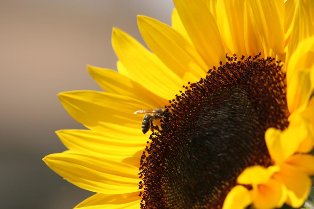 Die Biene hatte Hunger