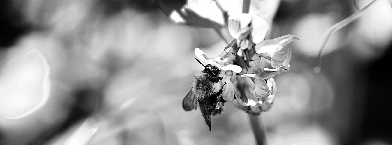 die Biene Maja :)