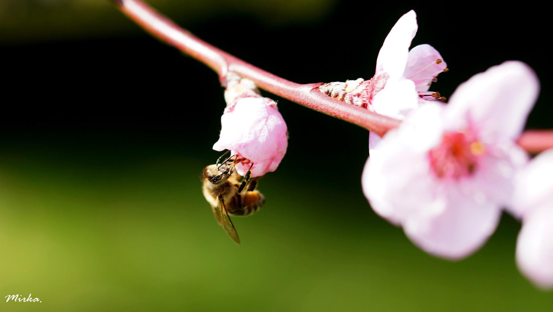 Die Bienen sind da... :-)
