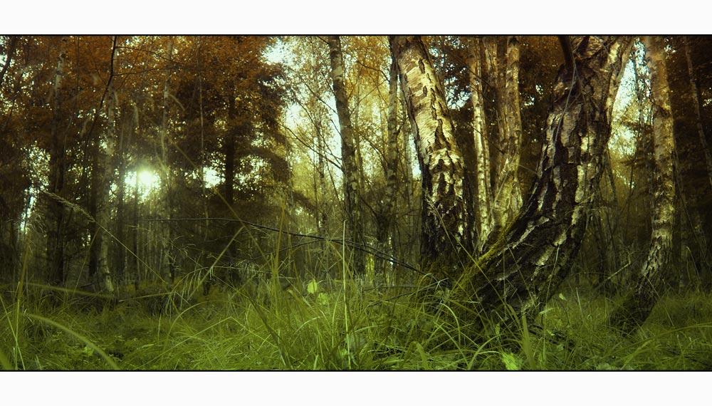 Die Birke im Moor