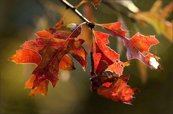 Die Blätter fallen, ...