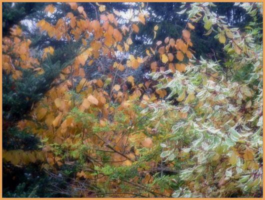 heidek Fotos& Bilder Fotografin aus Ostfriesland, Deutschland fotocommunity ~ 01120309_Blätter Von Sukkulenten Fallen Ab