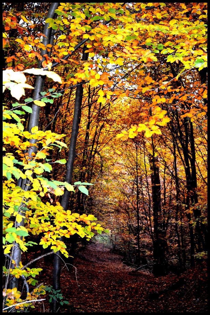 die Blätter fallen von den Bäumen