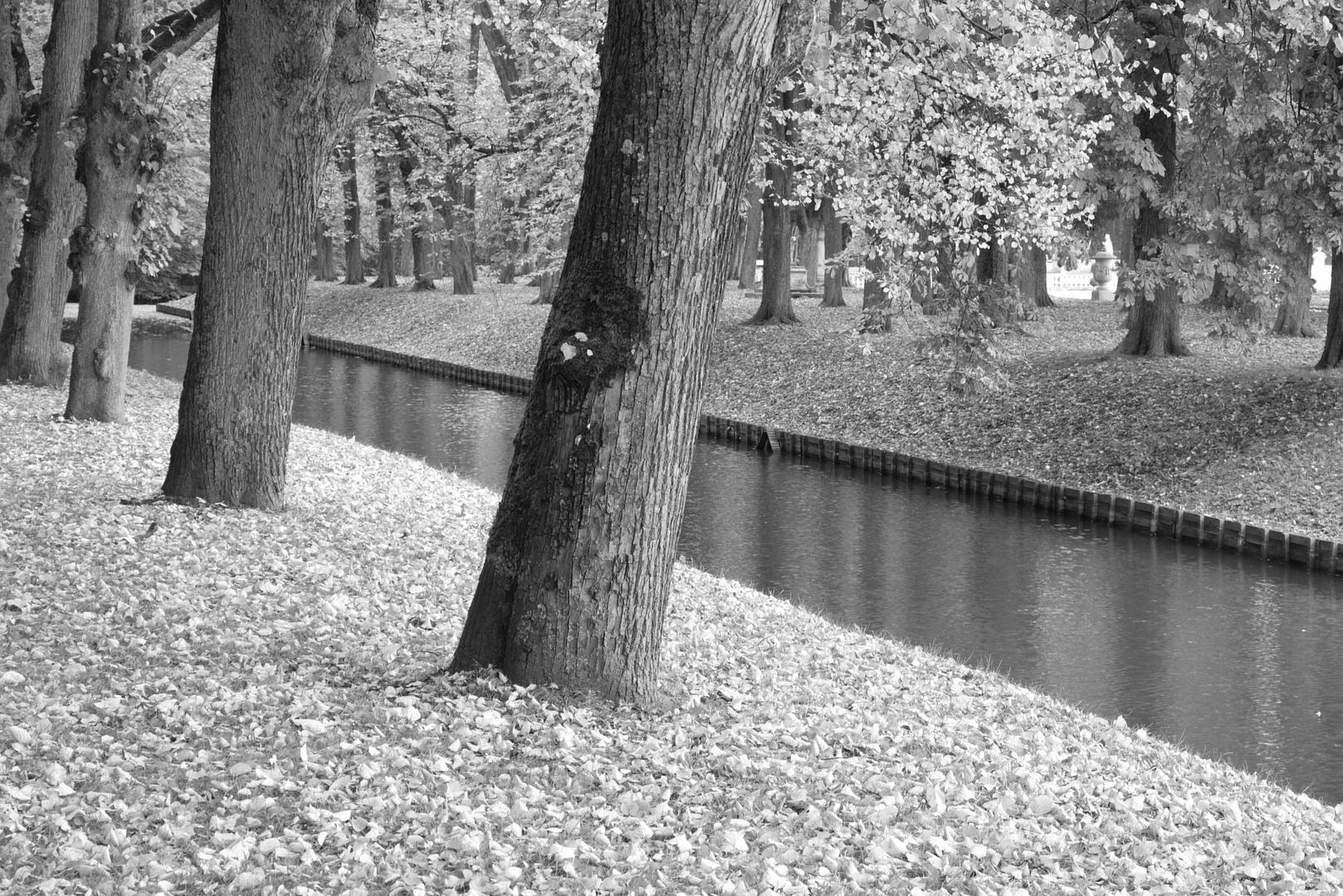 Die Blätter fallen wieder