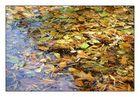 Die Blätter vergammeln langsam auf der Wasseroberfläche!