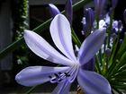 Die blaue Blume?