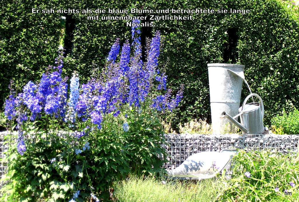 die blaue blume der romantik foto bild pflanzen pilze. Black Bedroom Furniture Sets. Home Design Ideas