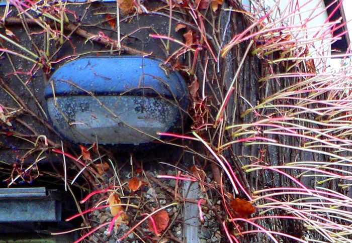 Die blaue Lampe - der Herbst gab sie wieder frei