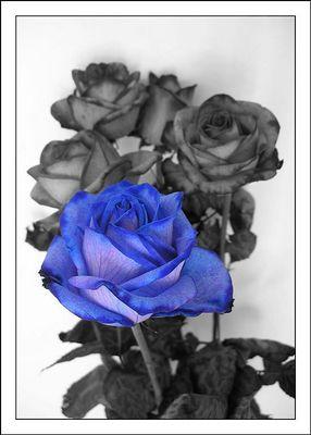 die blaue Rose ist echt, sonst hab ich mich etwas gespielt