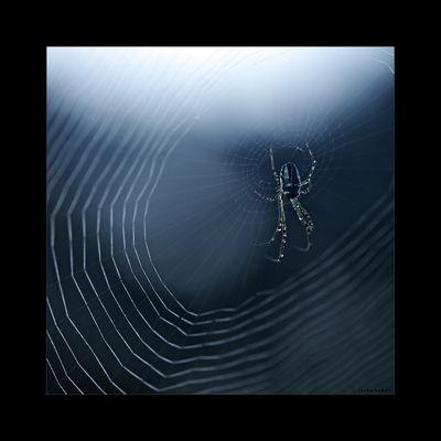 Die blaue Spinne