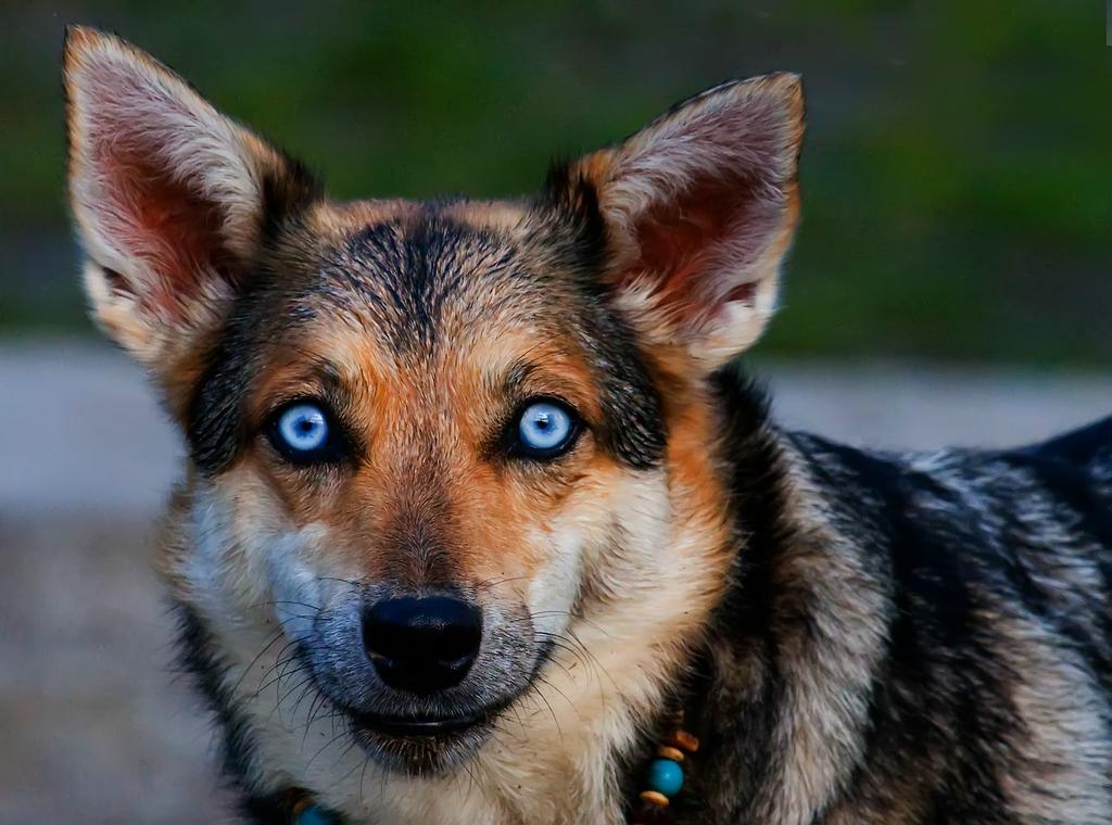 Die blauen Augen
