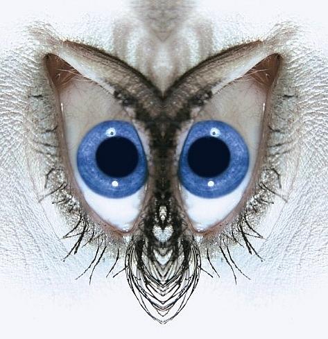 Die blauen Augen einer Eule