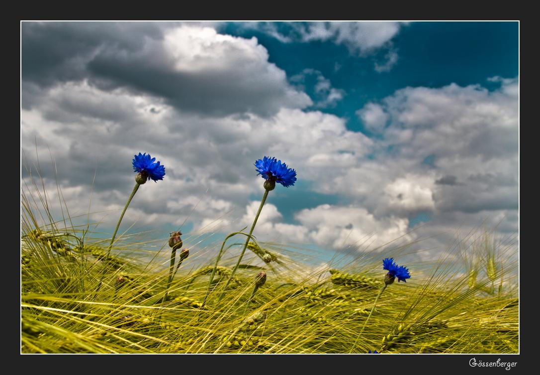 Die blauen vom Feld #3