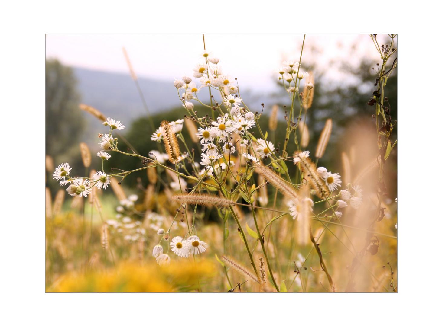 Die Blümchenwiese