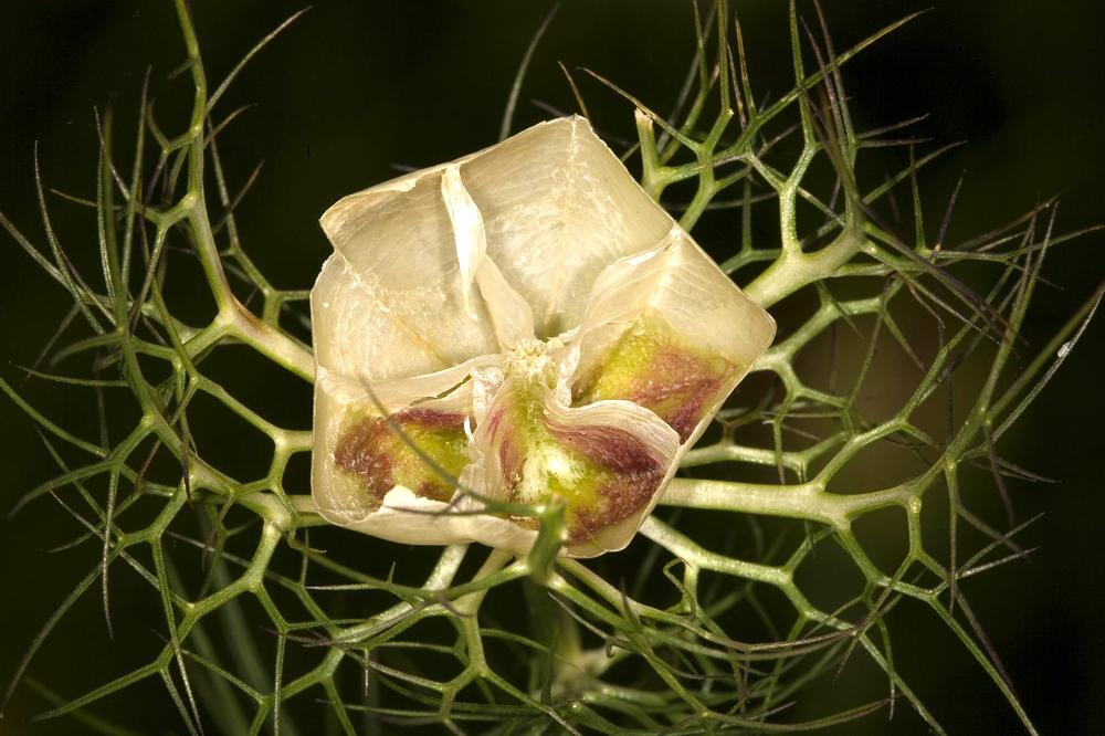 Die Blüte 1