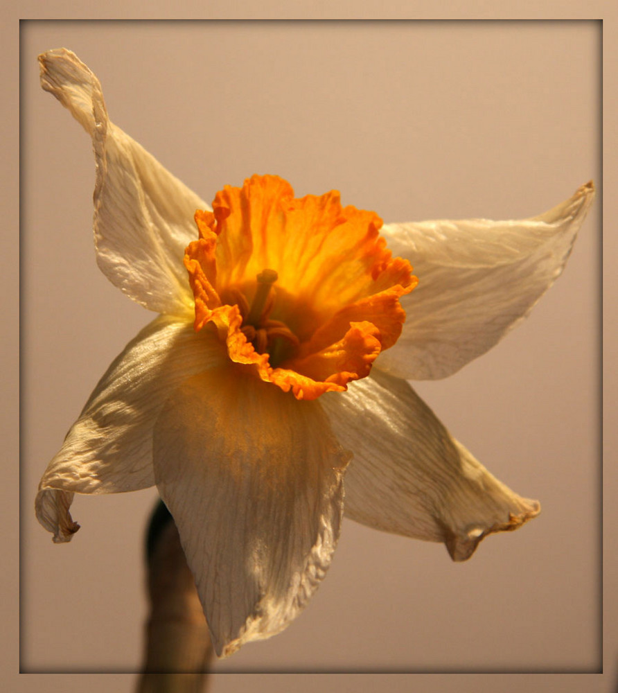 ... die Blüte ...